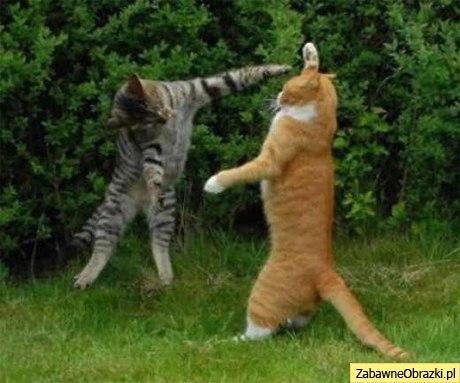 walczace-koty.jpg