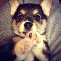 Najwięksi psiarze na świecie <3 !