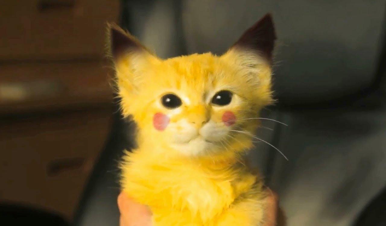 zagadkowy kotek