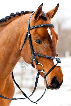 a4403a86adf7e Czy ogłowie meksykańskie dla konia mu szkodzi ? - Zapytaj.onet.pl -