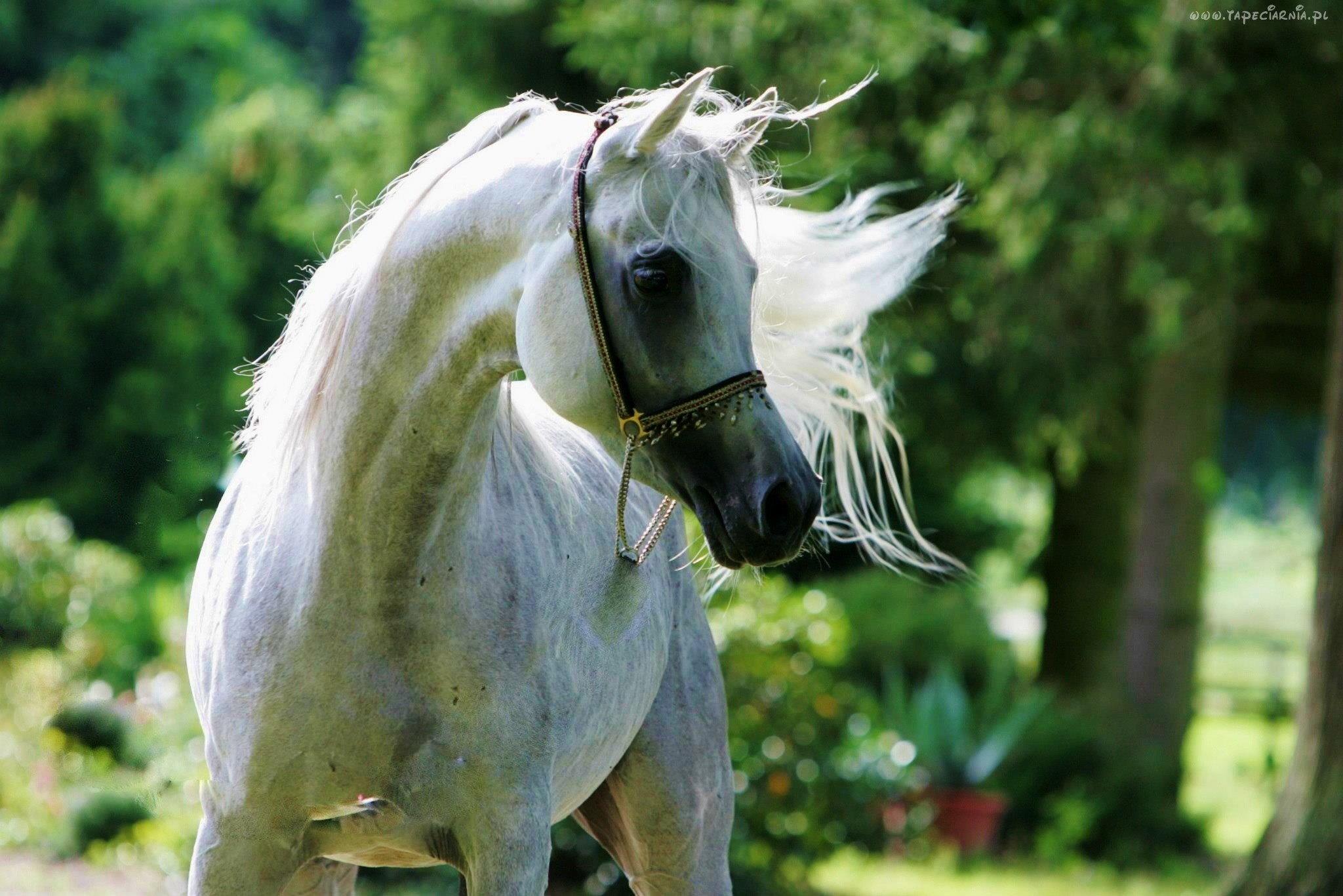 Konie moim życiem ♥