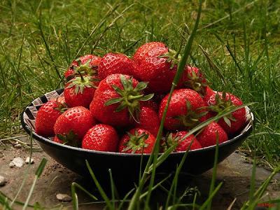 Strawberries-08.jpg
