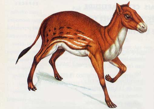 fact-about-horse-hyracotherium.jpg