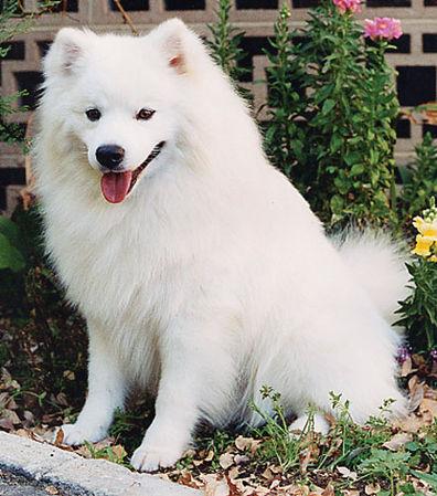 W superbly Jakie to małe rasy psów? - Zapytaj.onet.pl - RQ05