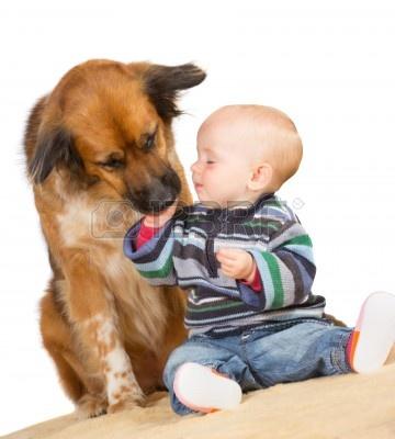 15154609-wierny-pies-rodzinny-delikatnie-lizac-reke-cute-baby-jak-siedza-razem-na-podlodze-na-bialym-tle.jpg