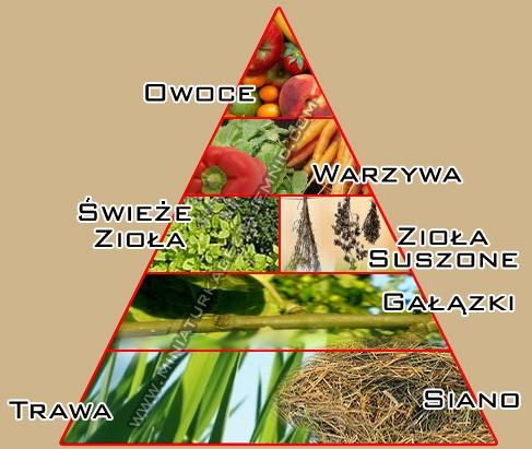 piramida-zywienie-znak.jpg