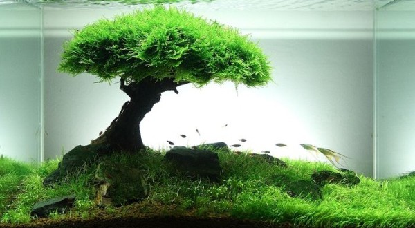akwarium-we-wnetrzu-pomysly-design-jak-zalozyc-piekne-nowoczesne-1-600x330.jpg