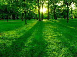 zielony-park-300x225.jpg