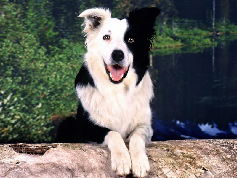 Pies - wyraża więcej niż tysiąc słów