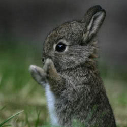 bunny Pictures, Images and Photos