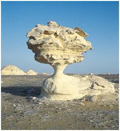 grzyb-skalny.jpg