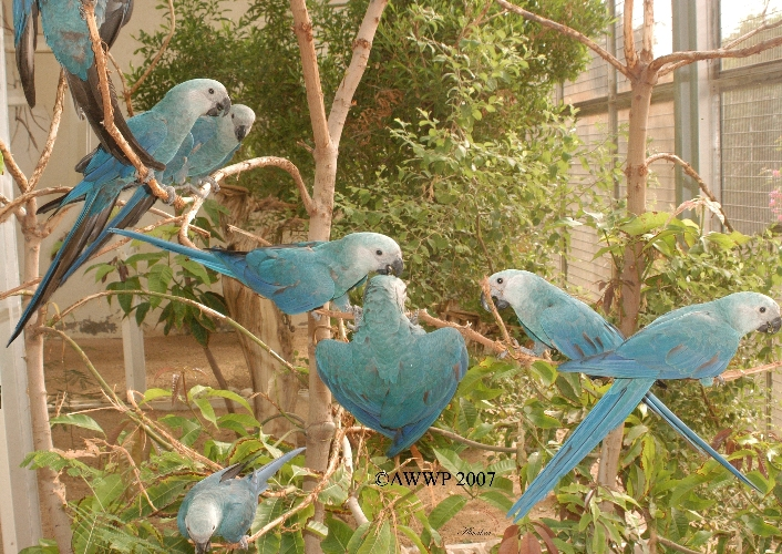 Kochamy papugi oraz ptaki :)