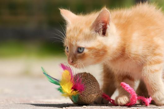 zabawki-dla-kotow.jpg