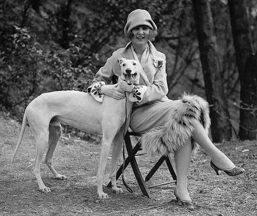 Greyhound_1713px-MargaretGormanPetDogApr1925Retouched_large.jpg