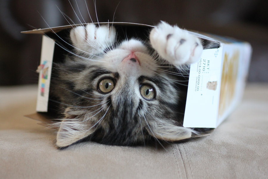 it__s_a_cat_in_a_box_by_equinejumper2-d5375js.jpg