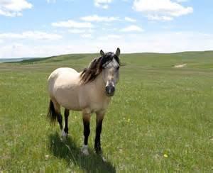 Koń to nie przedmiot. Stań w jego obronie.