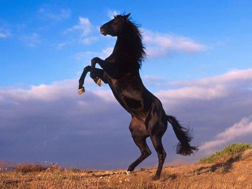 czarny-kon.jpg