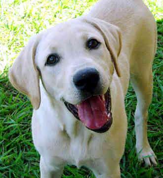 mostpopular-dogbreedsinAmerica.jpg