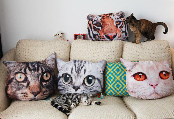 kocie-poduszki.jpg
