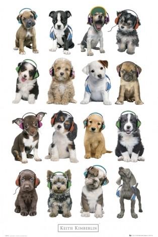 Klub Miłośników Zwierząt:)