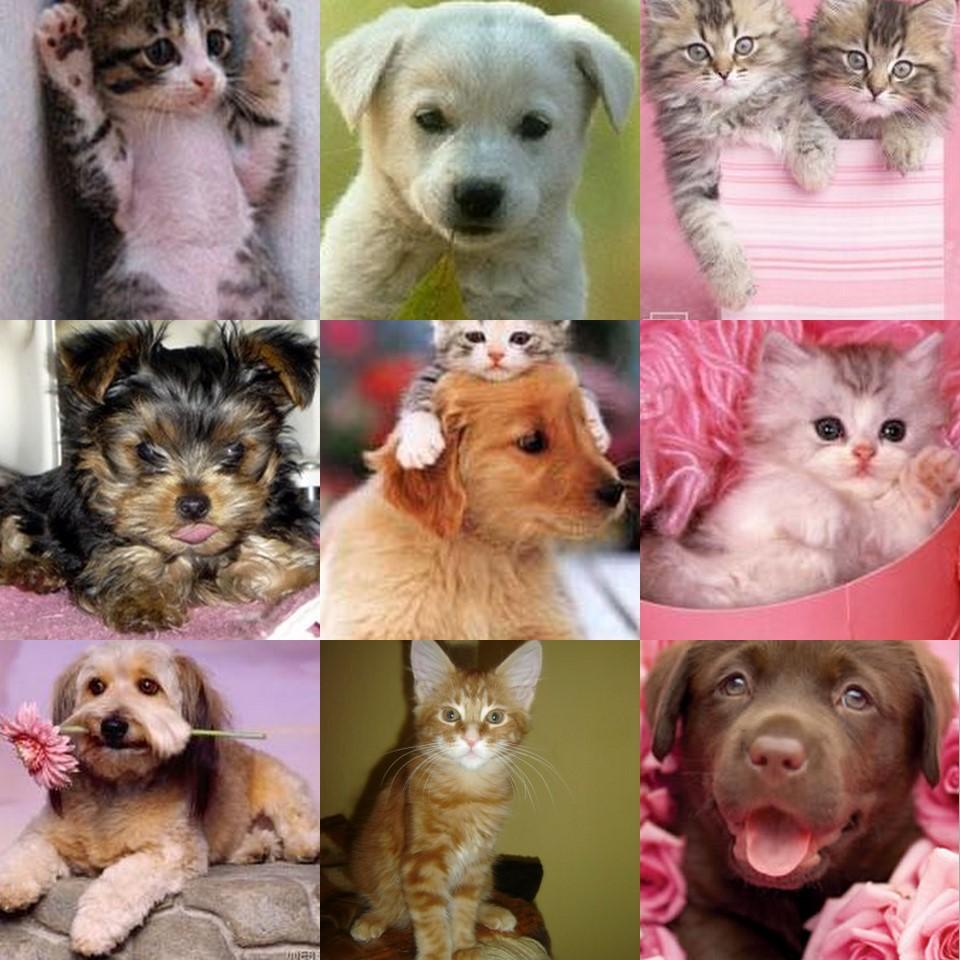 My to zwierzaki!!!