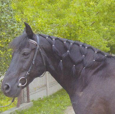 Jaką Fryzurke Mogę Zrobić Dla Konia Z Krótką Grzywą