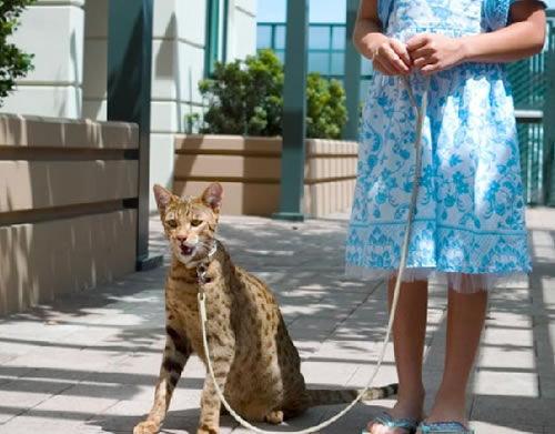 Wszystkie nowe Hodowla kotów - Zapytaj.onet.pl - PH94