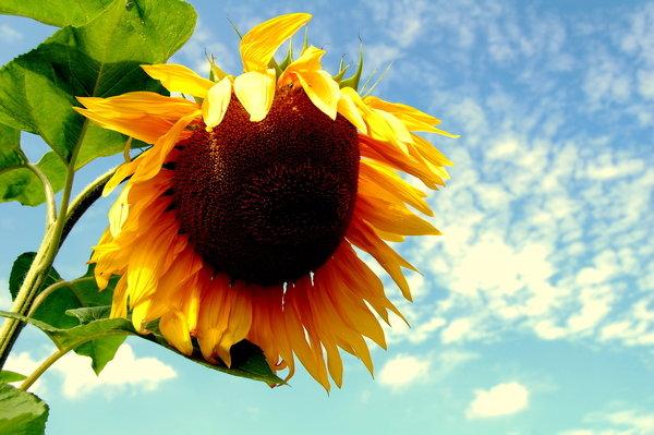 ♥ sun ♥