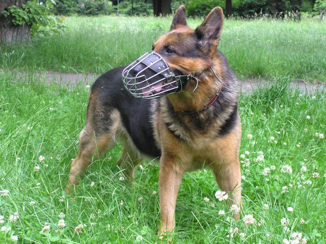 dobry-kaganiec-pies-moze-swobodnie-otworzyc-pysk.jpg
