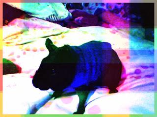 webcam-toy-foto7+%25281%2529.jpg
