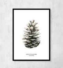 """Plakat botaniczny """"Szyszka"""" (białe tło) A4"""