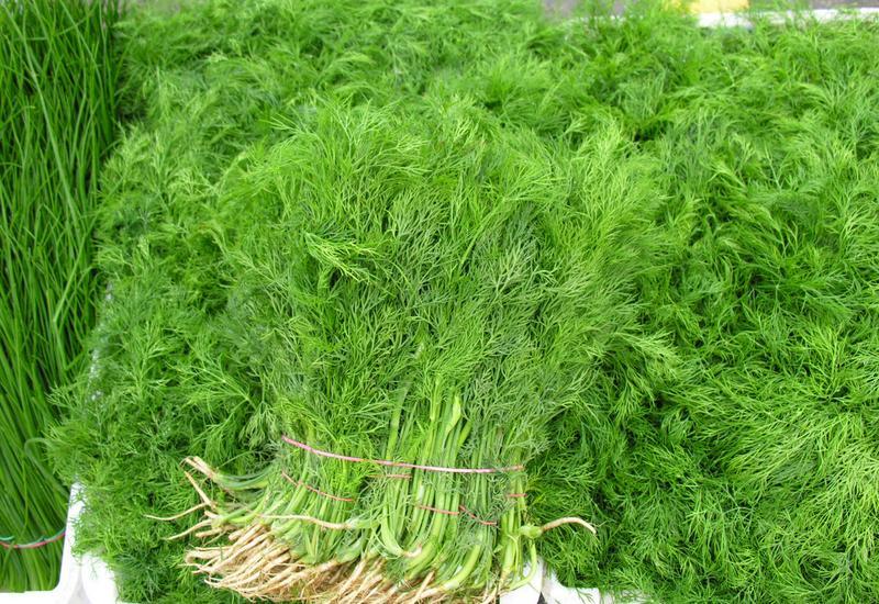 ceny kwiatów importowanych - Warszawski Rolno-Spożywcz... zdjęcie 8