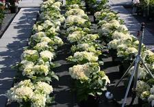 lipy - Centrum Ogrodnicze BAOBAB... zdjęcie 2