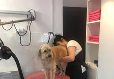 salon pielęgnacji psów - NEW JORK SALON PIELĘGNACJ... zdjęcie 14