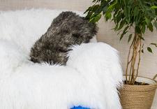 narzuta na sofę - FurDeko.pl - najpiękniejs... zdjęcie 10