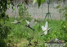 witnica - Park Dinozaurów. Leśna śc... zdjęcie 3