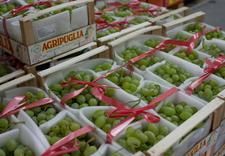 owoce sprzedaż hurtowa - Targpiast Sp. z o.o. zdjęcie 12