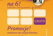 obroże - Salon Fryzjerski dla psów... zdjęcie 3