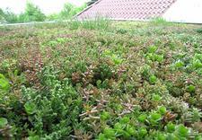 hydroizolacje EPDM, zielone dachy