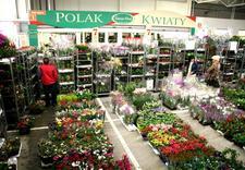 doniczki - Śląska Giełda Kwiatowa. F... zdjęcie 18