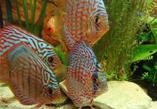 serwis akwariów
