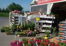 pilarki - Centrum Ogrodnicze Aronia zdjęcie 12