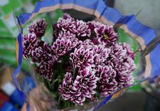 kwiaty ameryka południowa - Green Team - Import Kwiat... zdjęcie 9