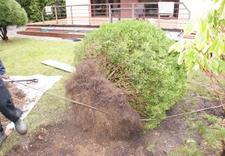 pielęgnacja drzew i krzewów - Ogrody Barw zdjęcie 14