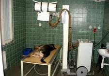 znakowanie zwierząt - Lecznica Dla Zwierząt s.c... zdjęcie 6
