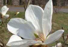 gardening classes - PAN Ogród Botaniczny-Czrb... zdjęcie 1