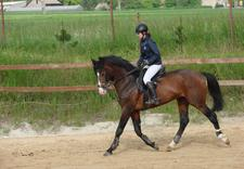 stadnina koni - Ośrodek Jeździecki Faruk zdjęcie 5