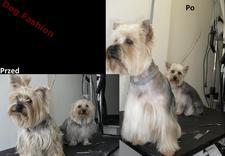 gryzonie - DOG FASHION Marta Bajczyk... zdjęcie 5