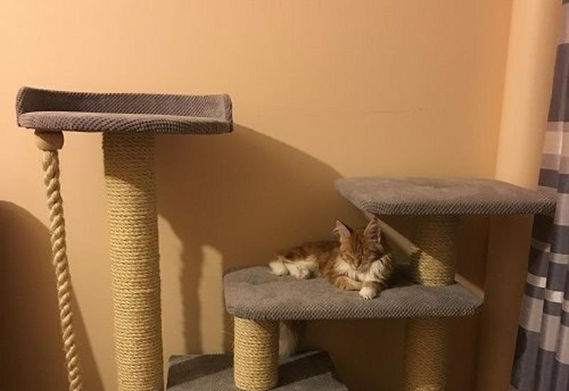 drapaki dla kotów drapaki dla zwierząt - Drapaki TUTZI zdjęcie 2