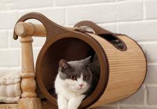 poidło dla kota - OFiuFiuPL zdjęcie 1